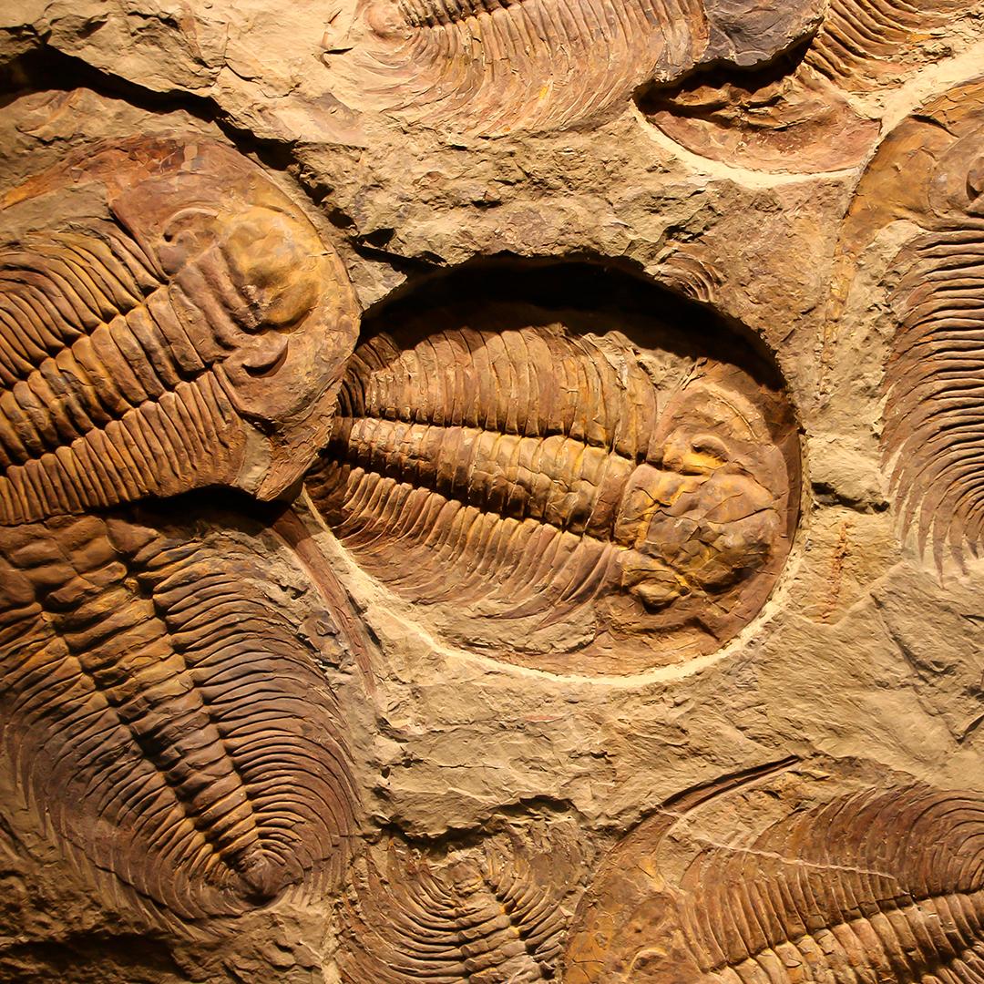 fotografía de fosiles