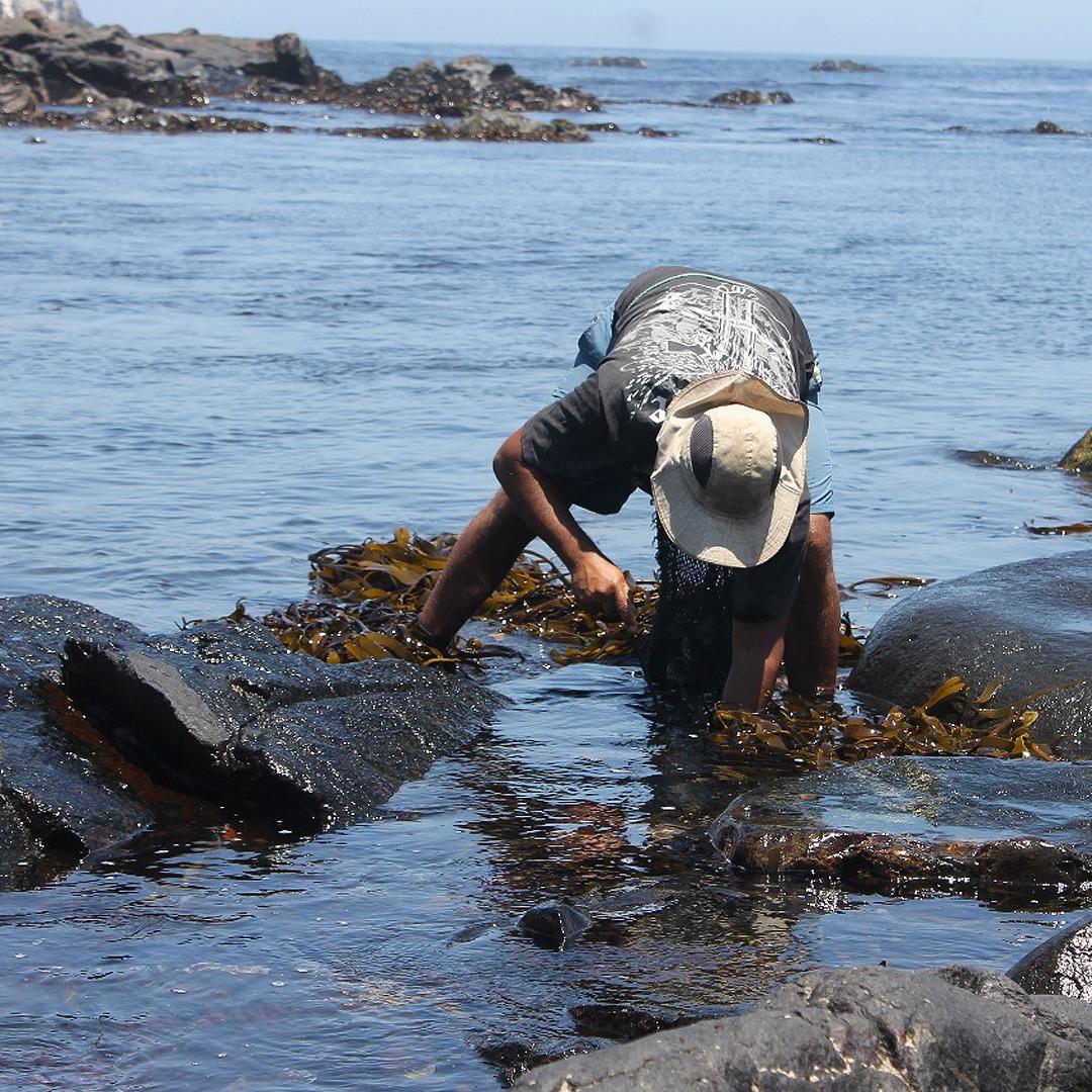yonathan castillo en rocas dentro del mar recogiendo algas