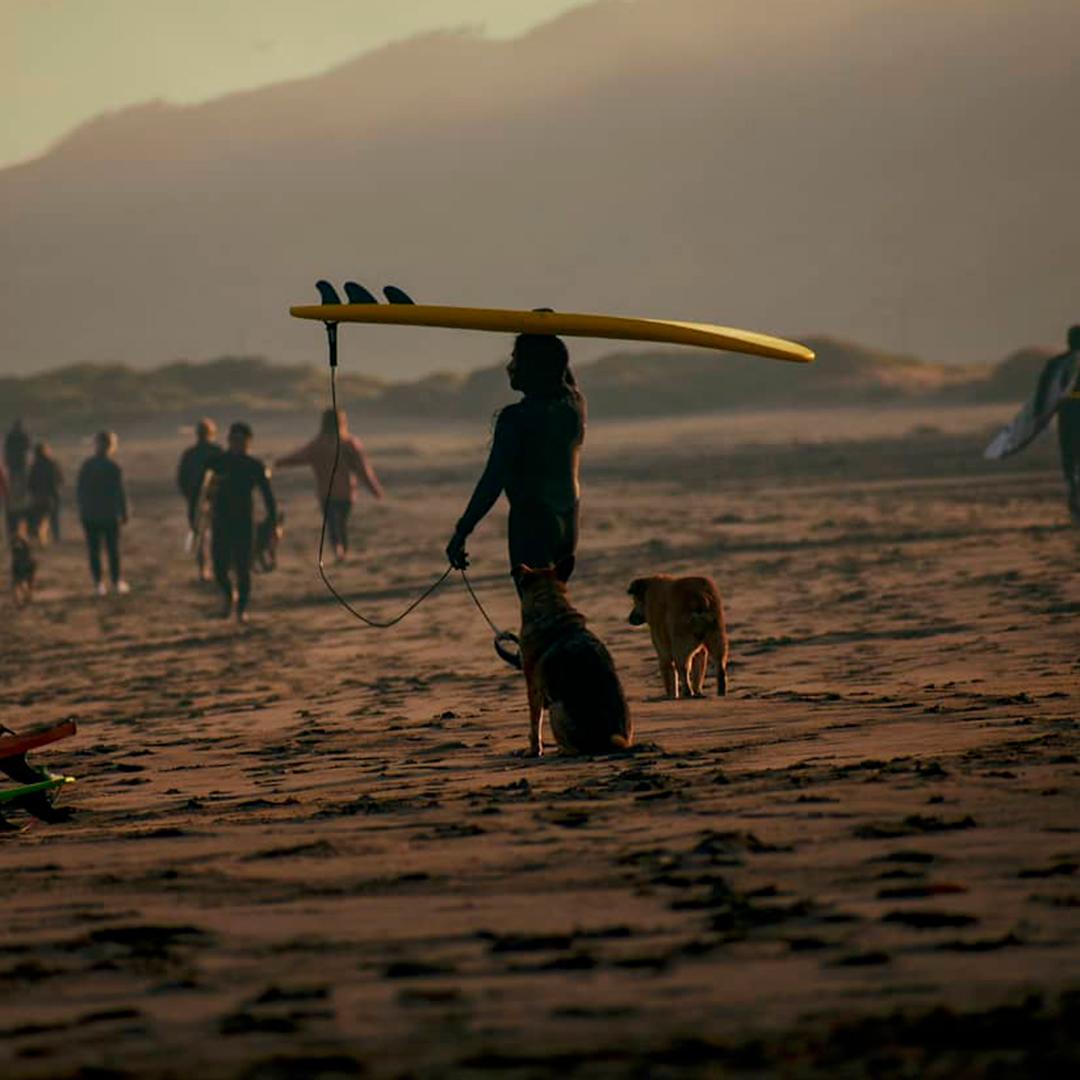 surfista con tabla en la cabeza acompañado de perros