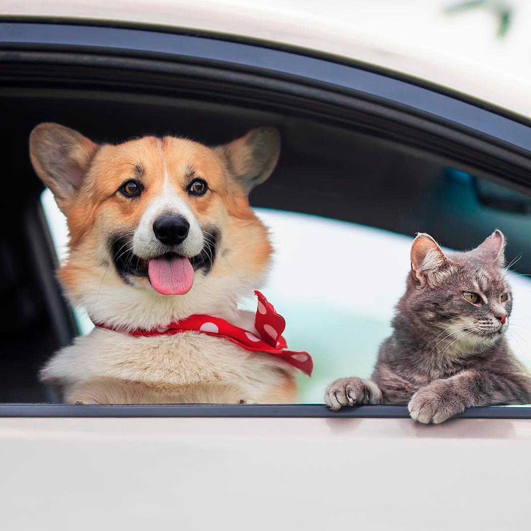 perro y gato mirando por ventana auto