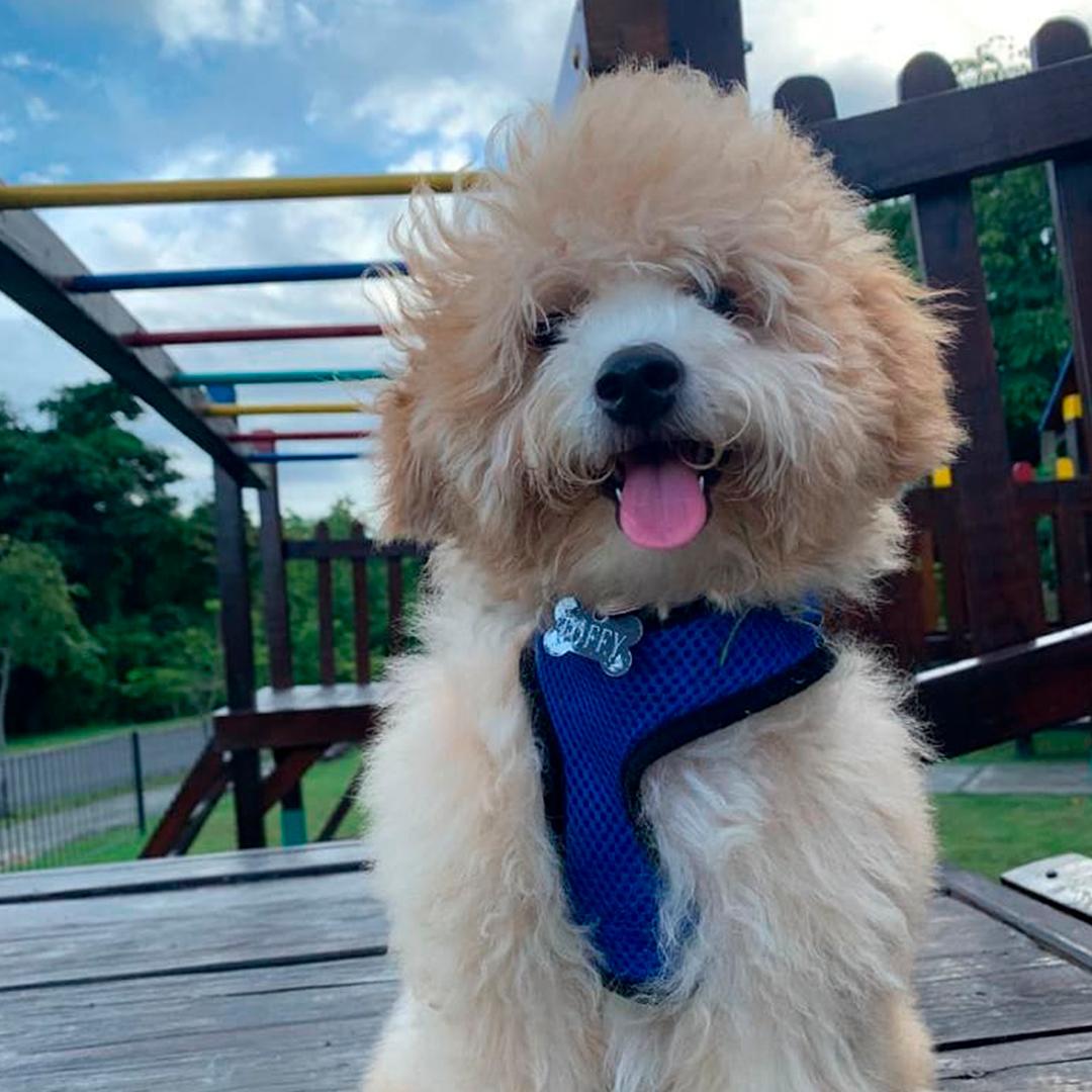 fotografía perro peludo con lengua afuera en plaza