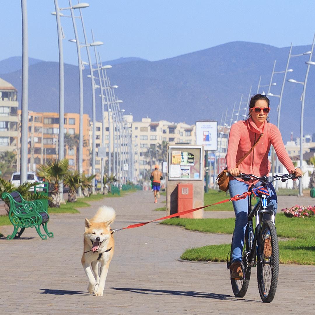 mujer andando en bicicleta en compañía de su perro corriendo con correa en avenida del mar