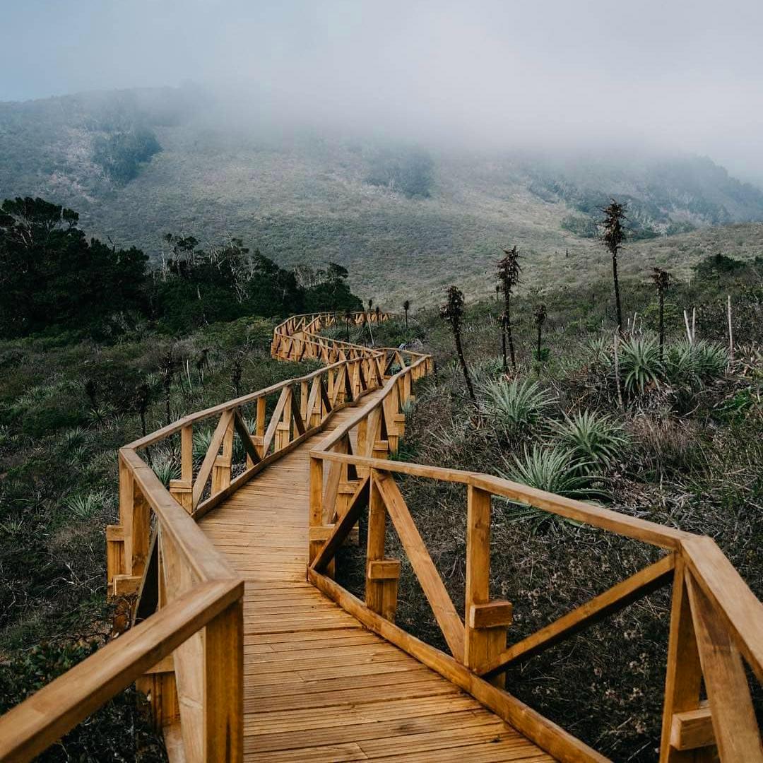 fotografía senderos de madera dentro del parque