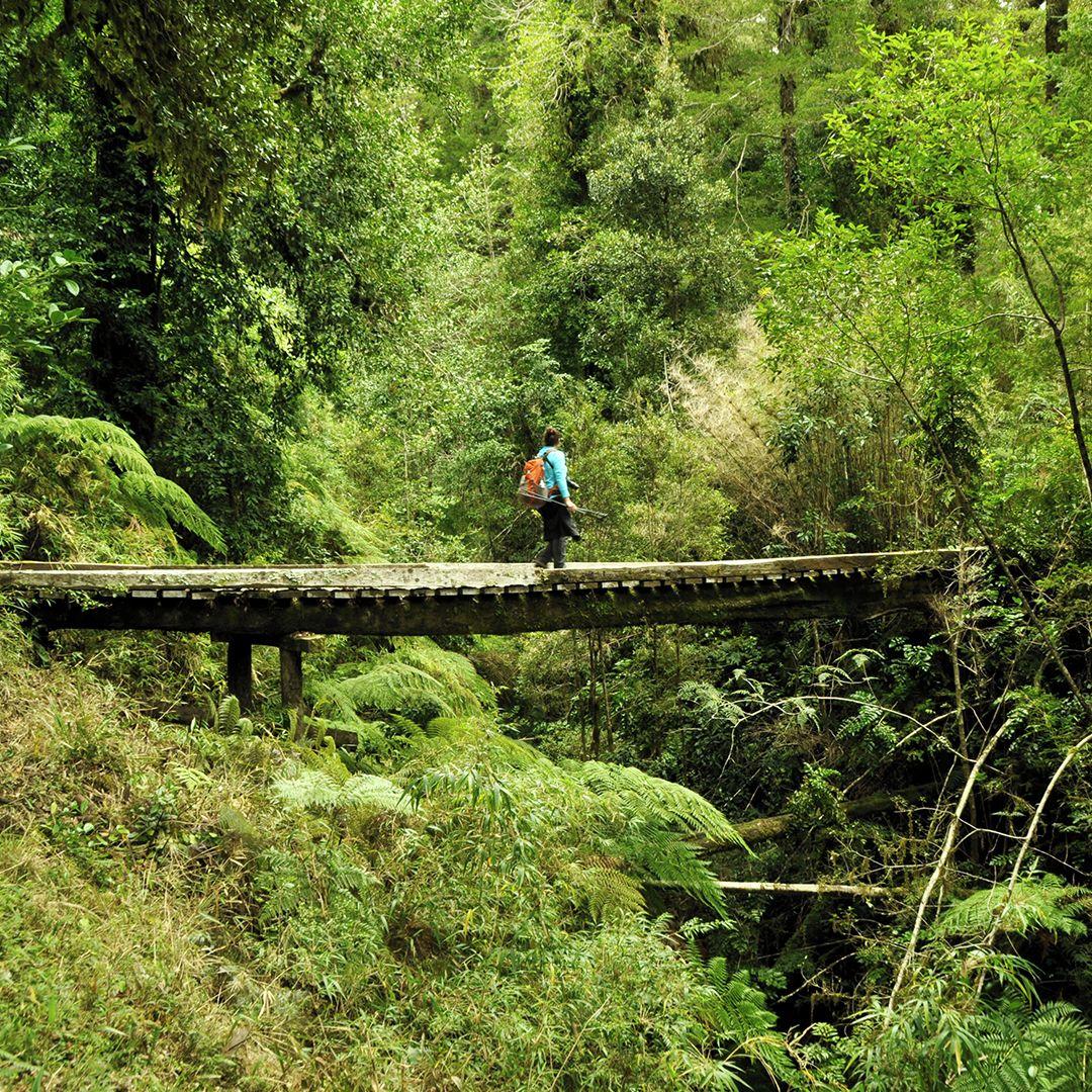 fotografía persona atravesando puente inmerso en la naturaleza
